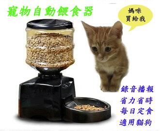 [BEEBUY]5.5公升超大容量自動餵食器 自動寵物餵食器 寵物自動餵食器