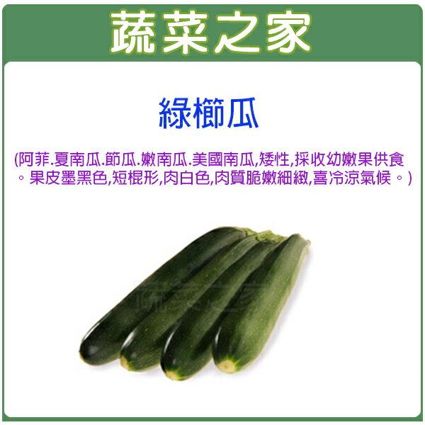 【蔬菜之家】大包裝G62.綠櫛瓜(阿菲.夏南瓜.節瓜.嫩南瓜.美國南瓜)種子35顆