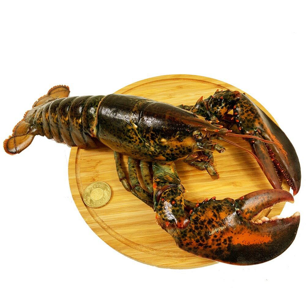 加拿大空運冷凍波士頓龍蝦(約600克/隻)【真食材本舖・RealShop|海鮮】