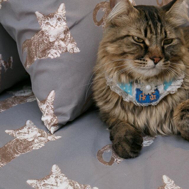 Iron cat 鐵灰小貓【床包鐵灰小貓】單人/雙人熱賣組  舒適磨毛布 台灣製造 8