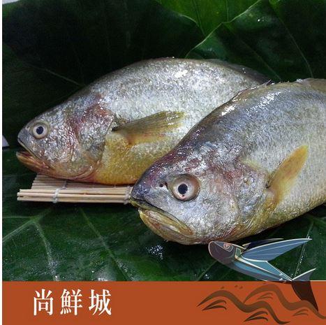 【尚鮮網】富貴黃魚 (600g+-5%)