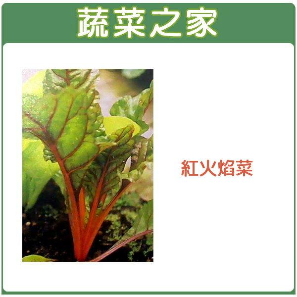 【蔬菜之家】A41.紅火焰菜種子100顆 (紅柄菾菜、紅火焰菜、君達菜、甜菜)