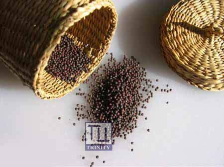 Black Mustard Seeds 印度黑芥末子