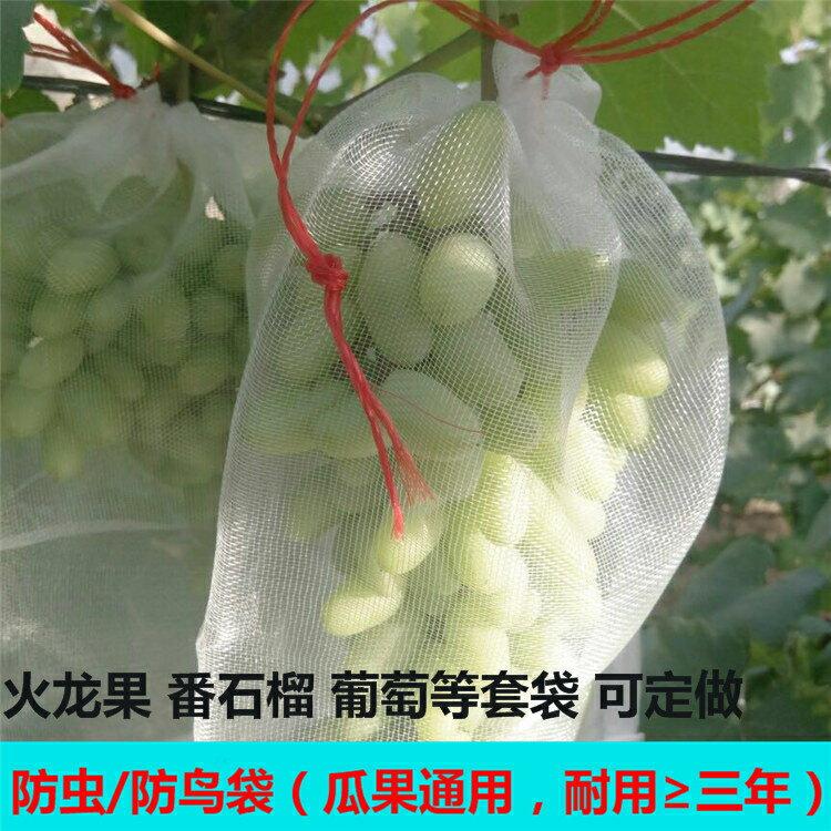 【快速出貨】尼龍網袋火龍果套袋專用套果袋葡萄套袋水果套袋防果蠅防蟲防鳥袋創時代3C 交換禮物 送禮