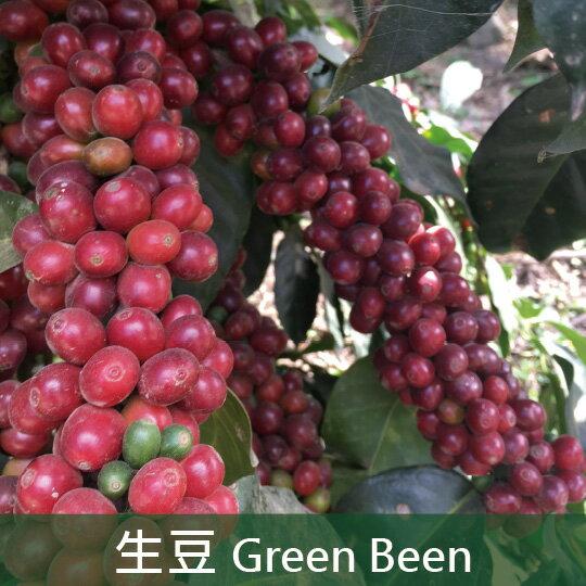 《未烘焙生豆》祕魯太陽與咖啡合作社