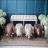 動物矮凳 動物造型椅-水牛椅,大象椅 居家擺設椅子 1