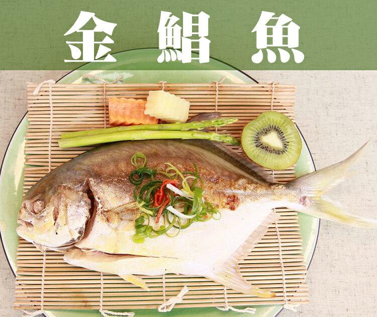 ~鮮樂GO~金鯧魚 500g土10^% 隻  肉質鮮嫩 ,媲美價值昂貴白鯧  喜氣金黃色澤