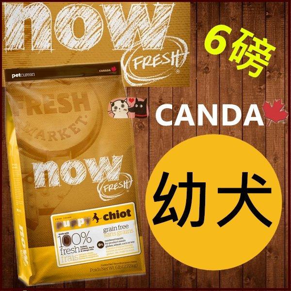 +貓狗樂園+ 加拿大NOW【鮮肉無穀天然糧。幼犬配方。6磅】1150元 - 限時優惠好康折扣