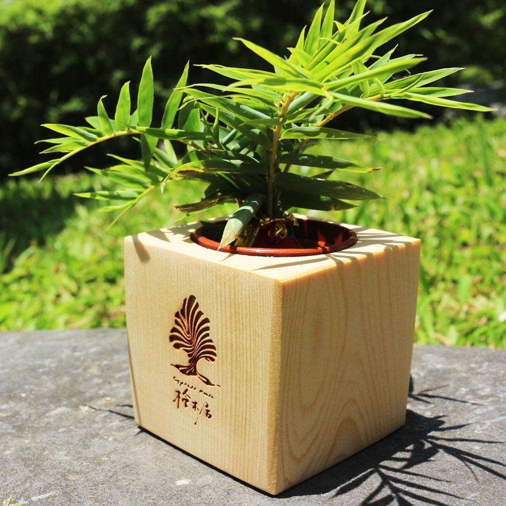 加拿大檜木 原木小盆栽