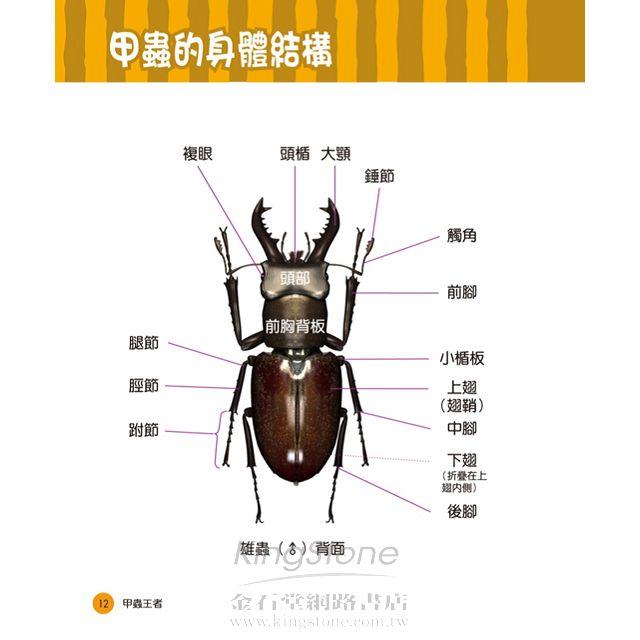 甲蟲王者:50隻最強、最美的台灣獨角仙、鍬形蟲圖鑑 5