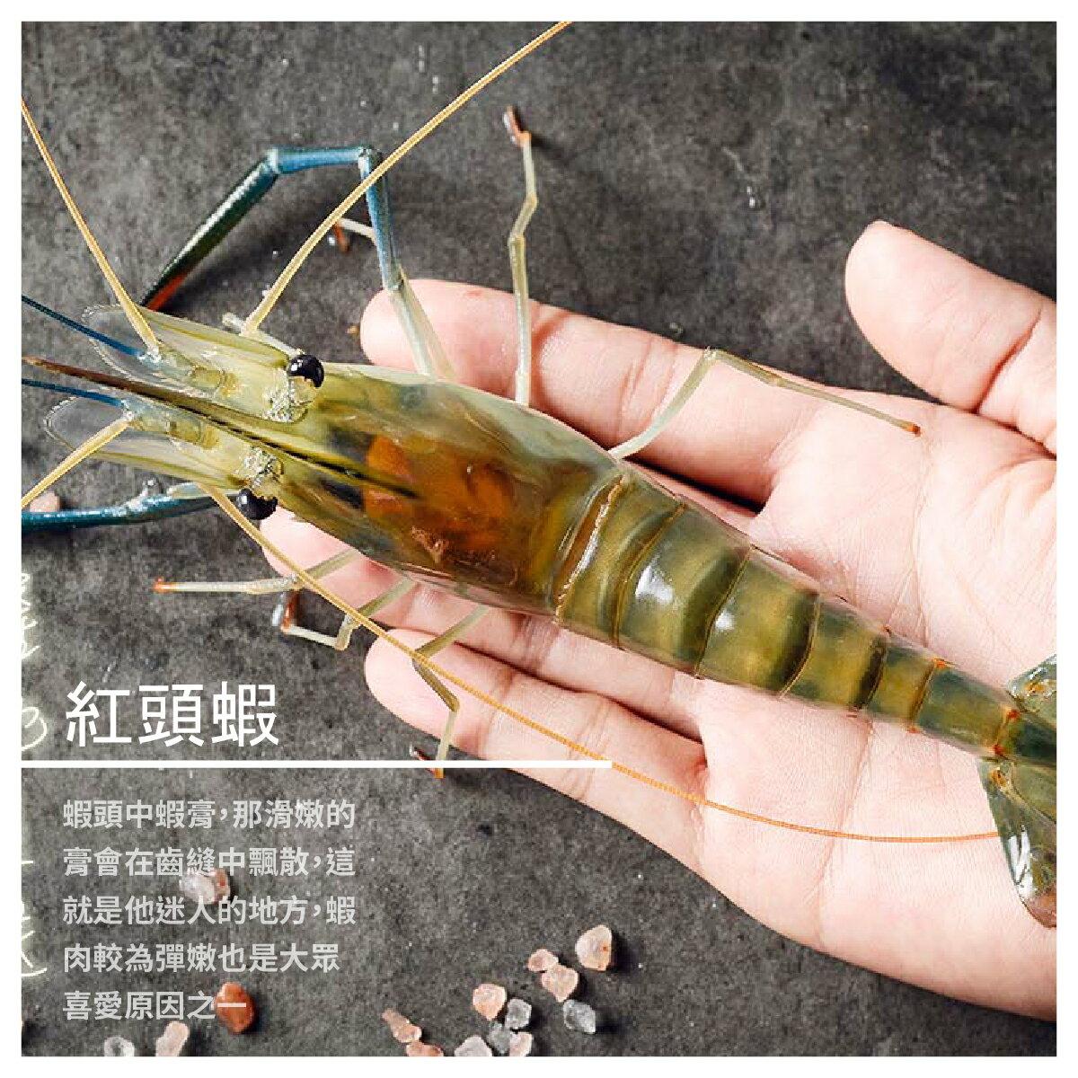 【黑豬泰國蝦宅配】紅頭蝦 600g