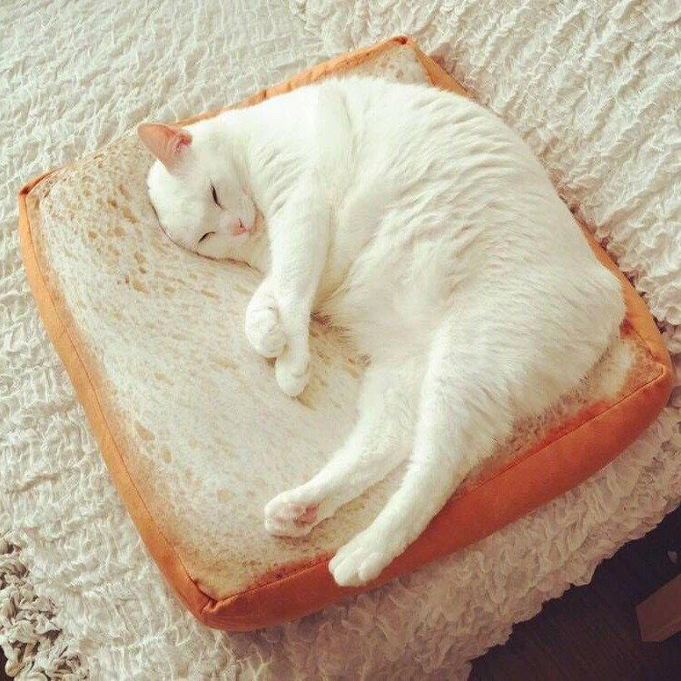 IG夯款! 熱賣款! 貓奴必備 仿真吐司坐墊 貓咪坐墊 來一份貓吐司 一片吐司 吐司坐墊 【AJ002】