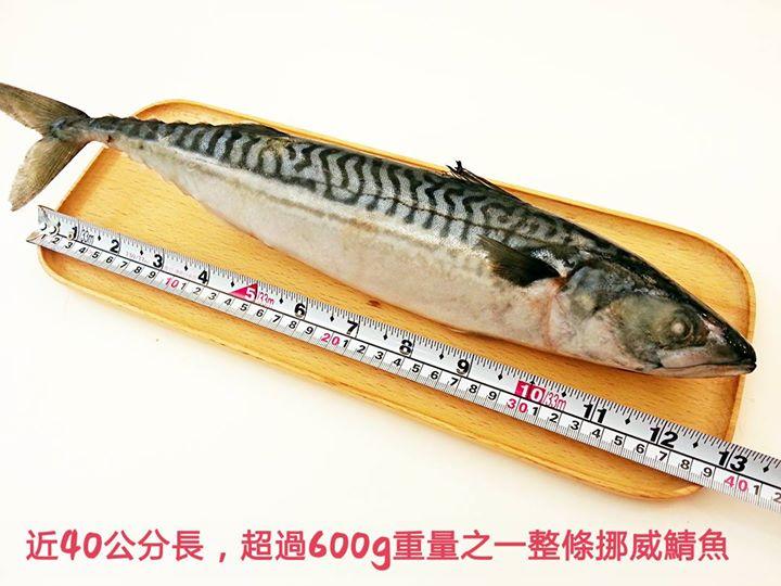 【雞籠好魚】一整條大尾挪威無鹽鯖魚*1條組,約600g-700g/1條 ★油質豐富,無加工鹽漬過