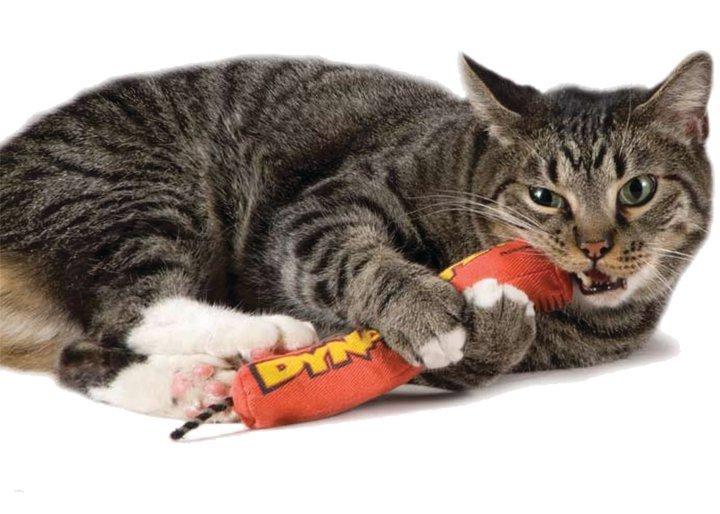 +貓狗樂園+ Petstages【energizing。魔力貓草系列。651。魔力紅鞭炮】250元 1