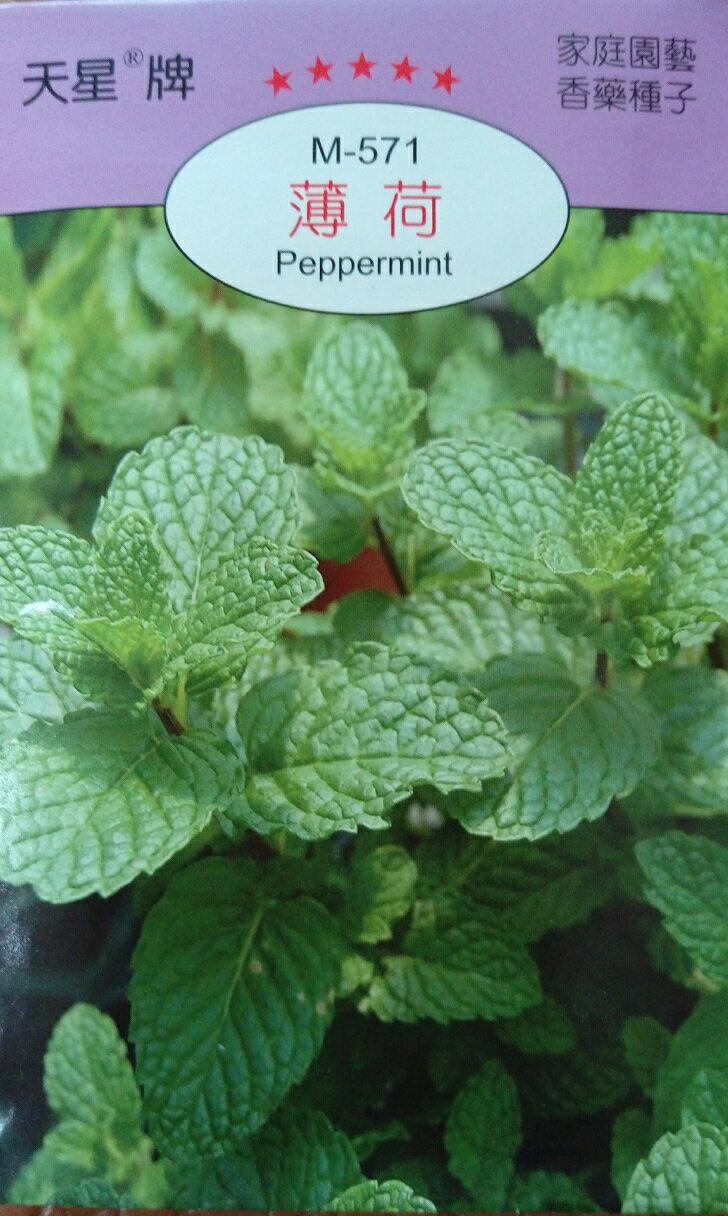 【尋花趣】薄荷(荷蘭薄荷) 香藥草種子 每包約100粒