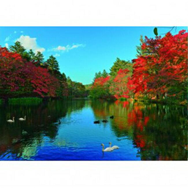 【P2 拼圖】秋之風景系列 輕井澤-雲場池白鵝(520pcs)(53x38) 25-022