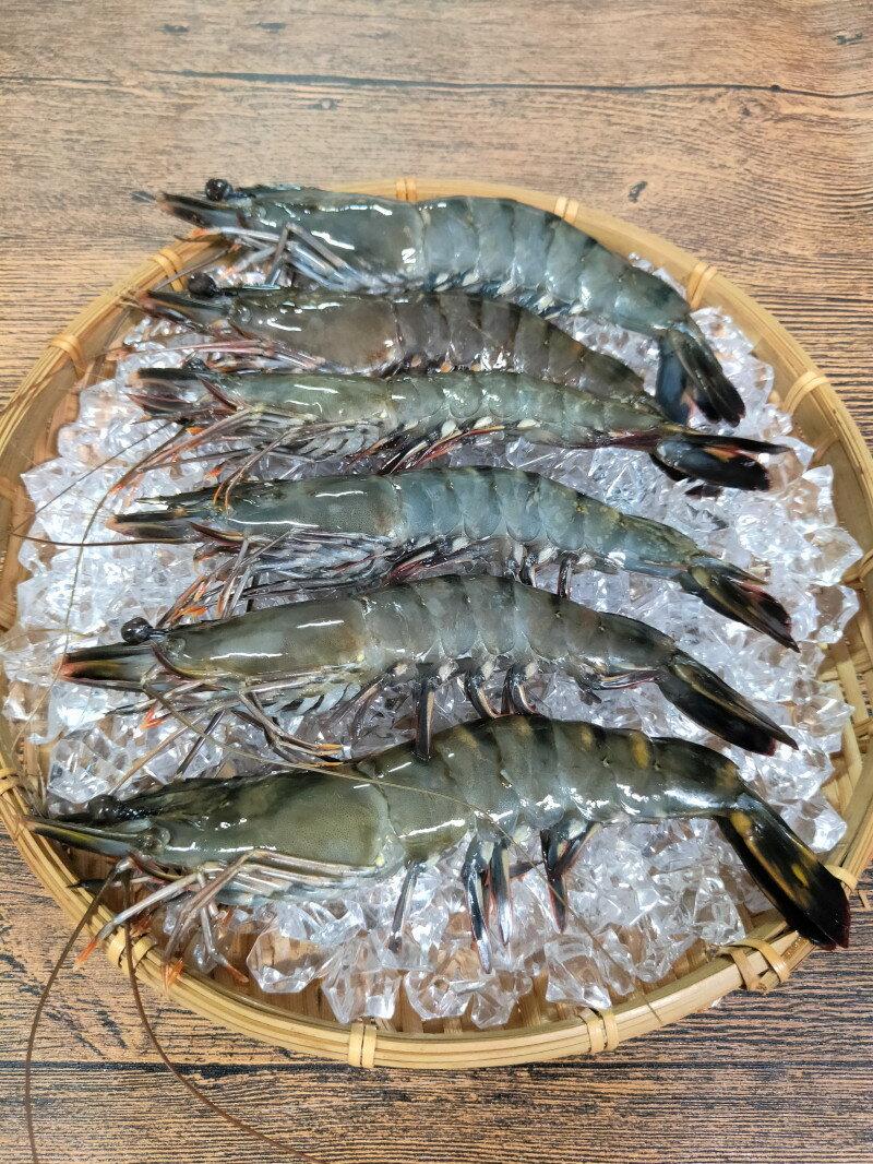 6尾大草蝦