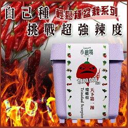 iPlant樂高農場輕鬆種盆栽系列-辣椒款/療癒小品/專利設計〔網購家〕
