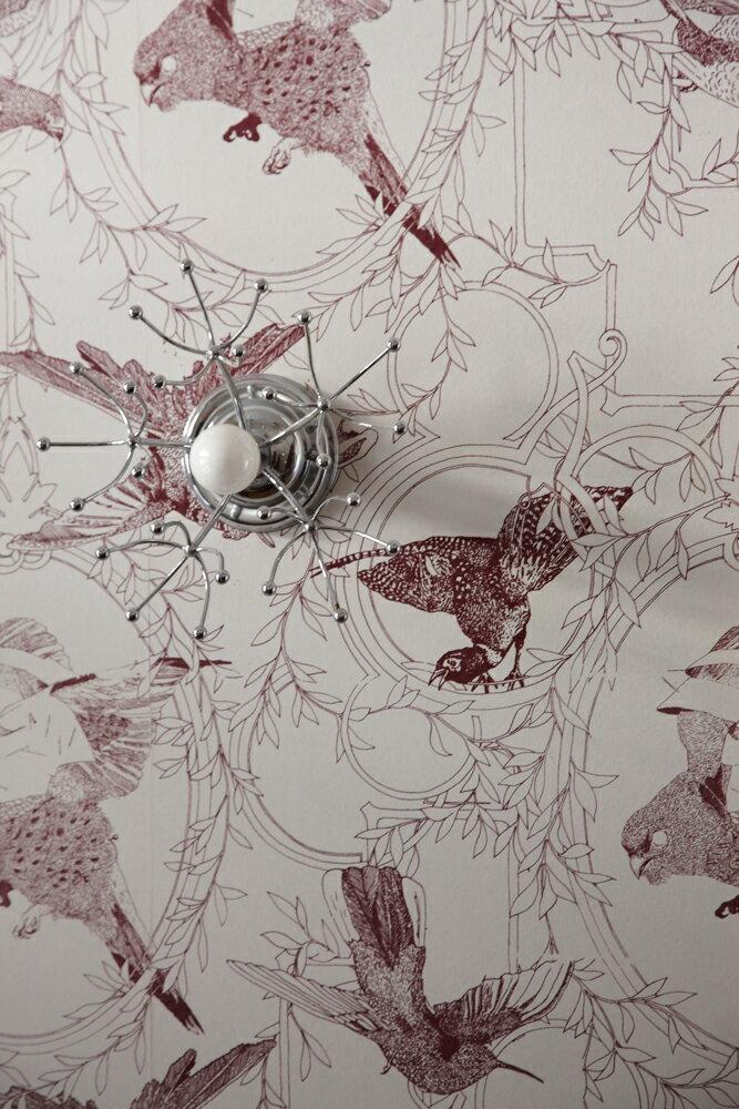 Daniel Heath   Taxidermy Birds  Grape  壁紙 (訂貨