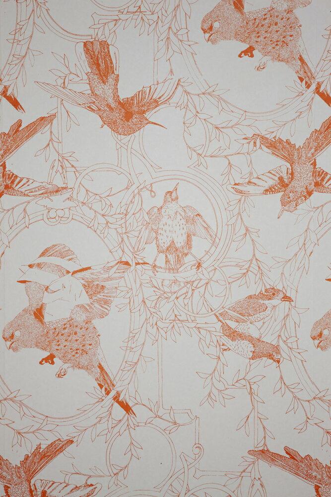 Daniel Heath   Taxidermy Birds  Tangerine  壁紙