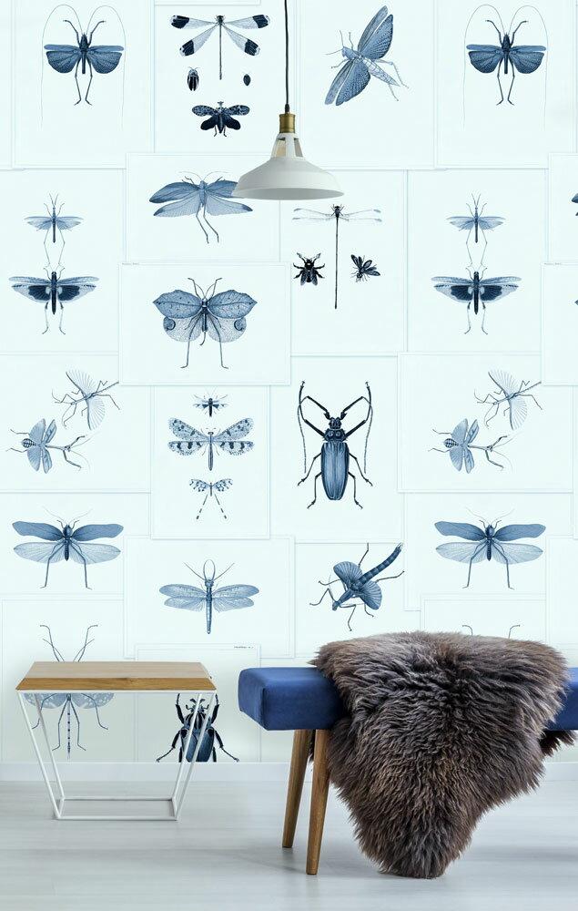 動物 昆蟲標本圖 拼湊 藍色 復古風  Mind the Gap  /  WP20235 0