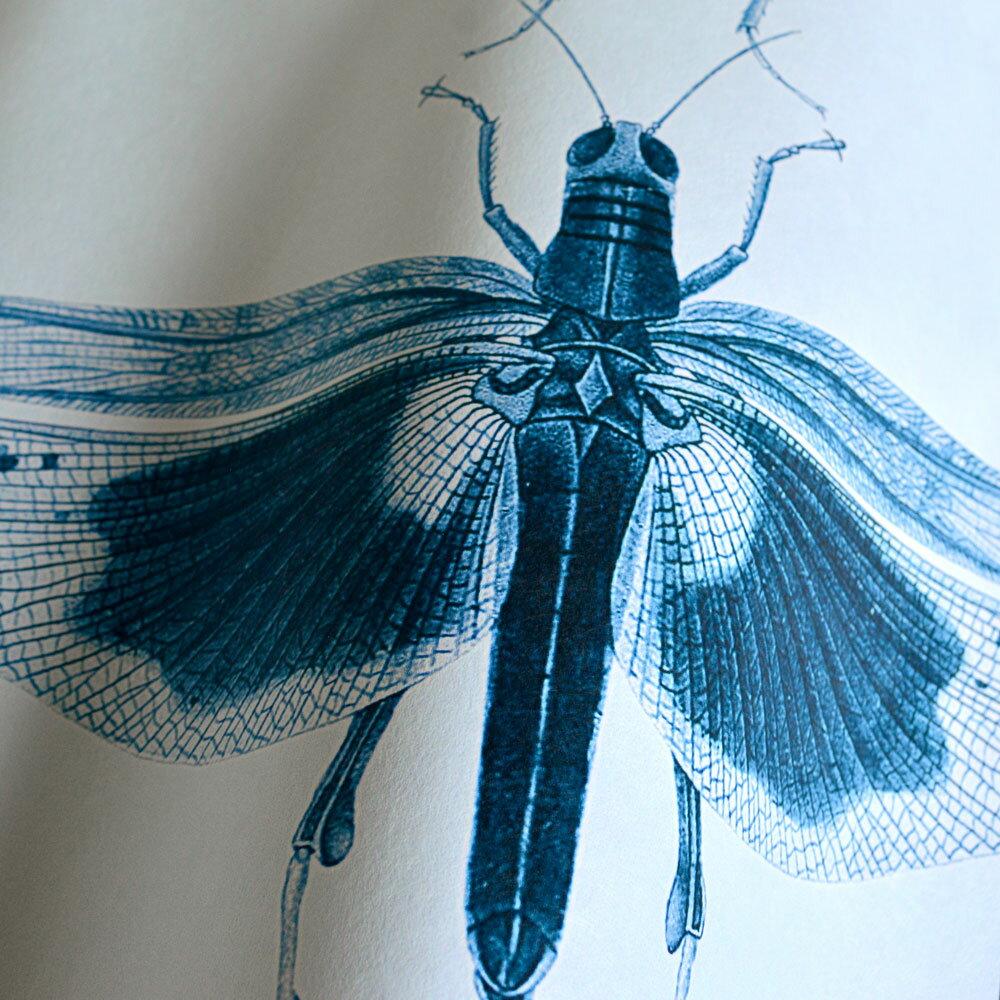 動物 昆蟲標本圖 拼湊 藍色 復古風  Mind the Gap  /  WP20235 2
