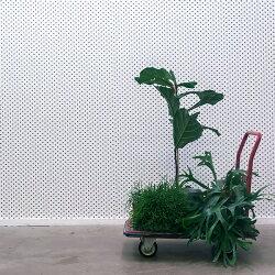 「9月全品免運費」 荷蘭NLXL LAB PARTICLES WALLPAPER BY TRULY TRULY / TTR-01 WHITE 壁紙 (訂貨單位48.7cm×9m/卷)