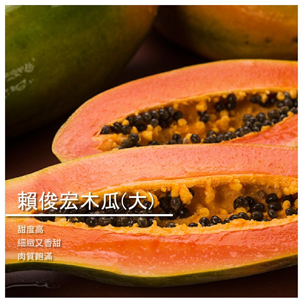 【賴俊宏木瓜農場】賴俊宏木瓜/大顆裝/8~12顆/箱