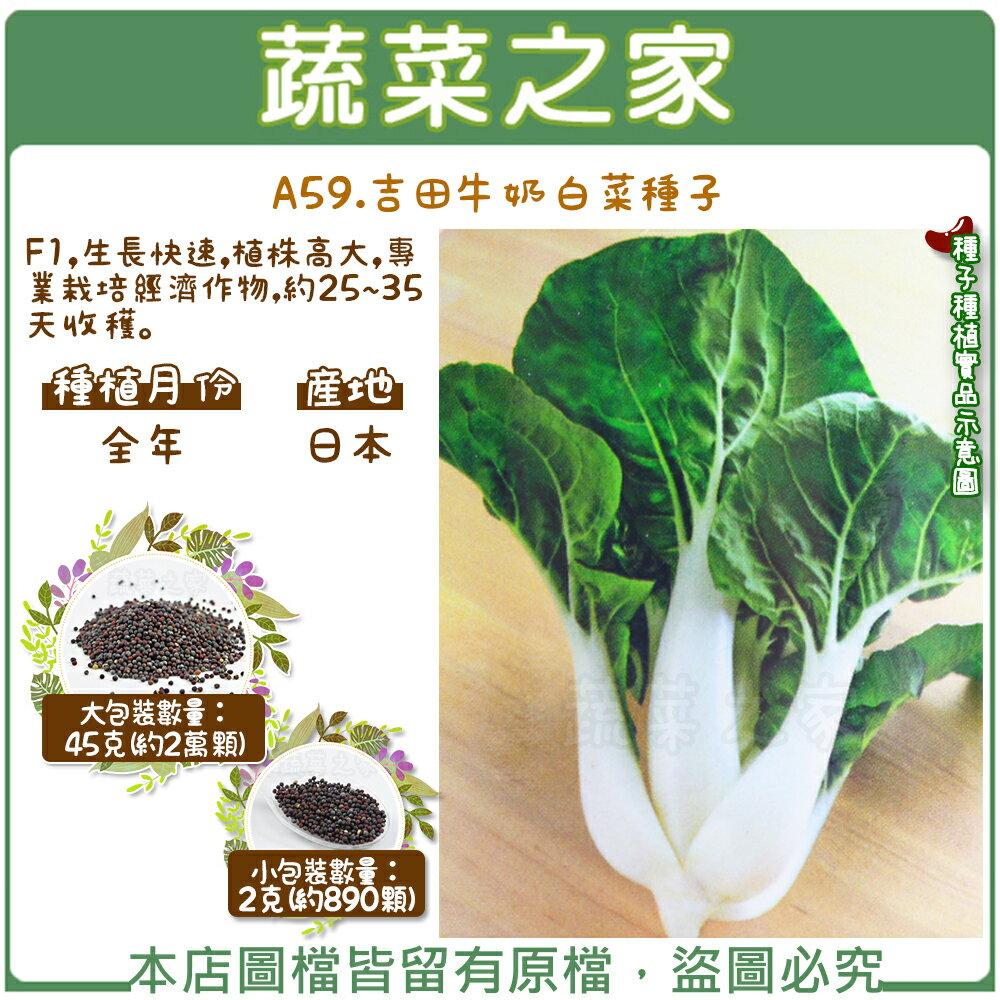 【蔬菜之家】A59.吉田牛奶白菜種子(共有2種包裝可選)