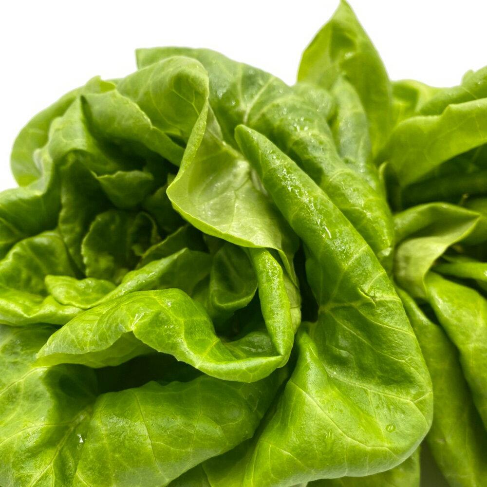 (免運)【MOS摩斯漢堡】水耕蔬菜嘗鮮組-奶油波士頓萵苣(180g / 包)(3入)紅橡木萵苣(150g / 包)(3入)(限時贈和風醬(220g / 罐)(1入) 2