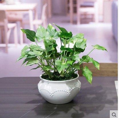 知根家居飾品仿真花仿真綠植盆栽盆景火鶴葉套裝客廳辦公室擺放