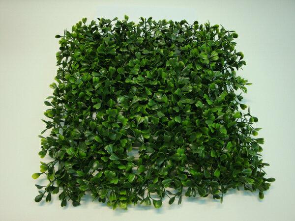 ★超低價★寬葉七里香草皮(短枝) / 人造草皮 空間 景觀 佈置 造景