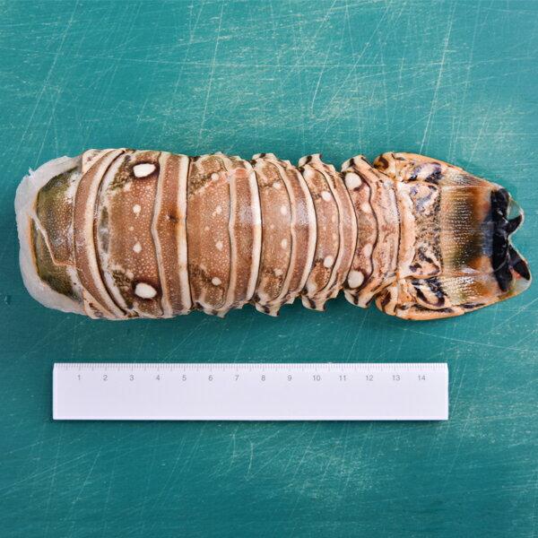 【新鮮物語】鮮肥彈牙生凍龍蝦身 220g±10% / 隻 2