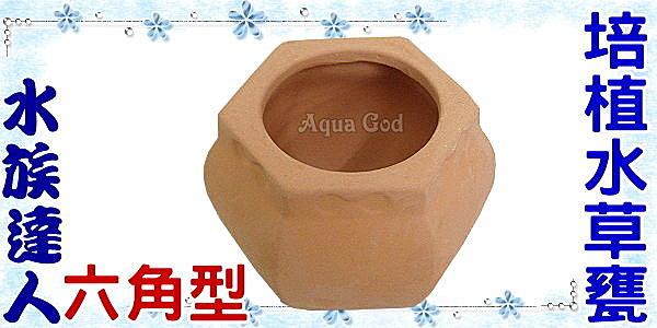 【水族達人】【造景飾品陶瓷甕】《六角型培植水草甕》繁殖、躲藏、過濾、裝飾