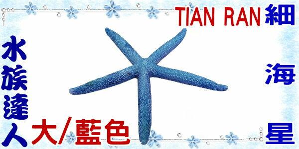 ~水族 ~~裝飾品~TIAN RAN~細海星  大  藍色  1473~S~海星  造景裝