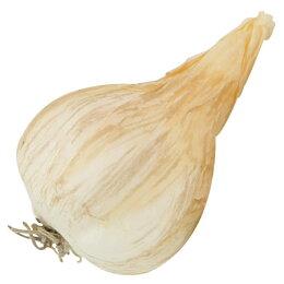 蔬菜裝飾品 大蒜 FT908 NITORI宜得利家居