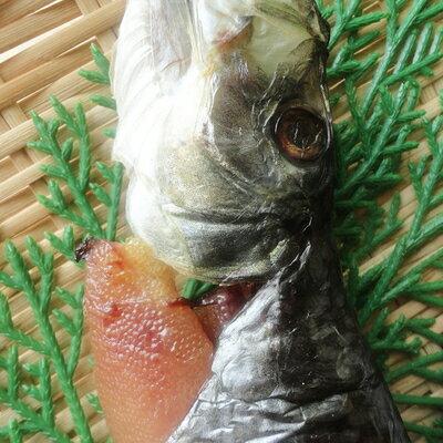 帶卵鯡魚一夜干(子持ち丸干しにしん)-1尾 1