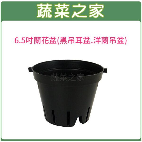 蔬菜之家:【蔬菜之家005-D140】6.5吋蘭花盆(黑吊耳盆.洋蘭吊盆)