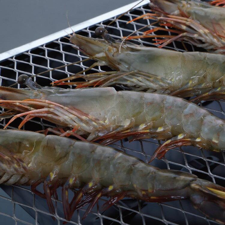 【賣漁人家】大尾鮮甜草蝦(XL) 1