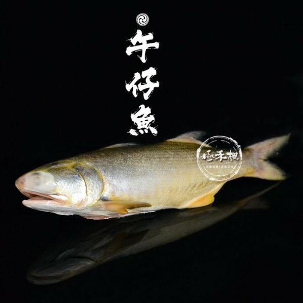 極禾楓肉舖&野生午子魚