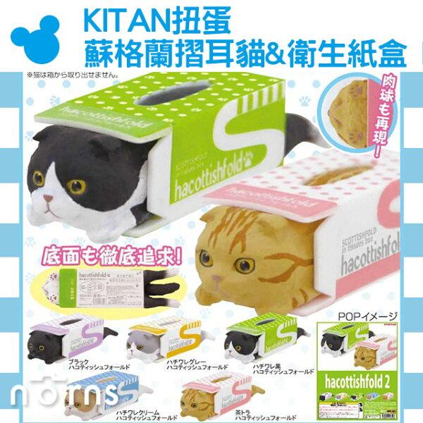 NORNS【KITAN扭蛋蘇格蘭摺耳貓&衛生紙盒P2】轉蛋公仔玩具裝飾面紙盒療癒小物擺飾貓奴貓咪