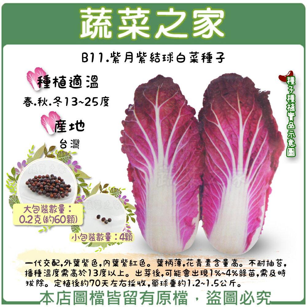 【蔬菜之家】B11.紫月紫結球白菜種子4顆、0.2克(約60顆)(共有2種包裝可選)