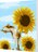 WallFree  DIY手繪數字油畫 掛畫-貓和向日葵 0