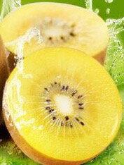 ZespriR 紐西蘭黃金SunGold奇異果【低溫免運】12粒裝【皇家果物】