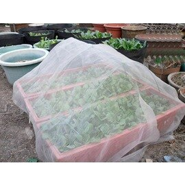 【防蟲網-30目】有機種植必備 寬幅2M/1.5M 以平方米計價 3平米起訂-5101002
