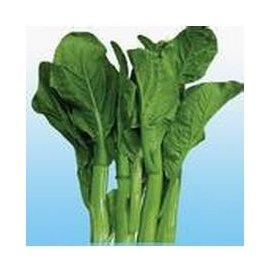 【菜種子-油青四九菜心-40g-原包】早熟 味甜 纖維少,40g/包,5包/組-5101002