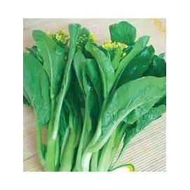 【菜種子-四九菜心200-粒-原包】園藝盆栽蔬菜,超早熟一個月採收,廠家封裝,約200粒/包,10包/組-5101002
