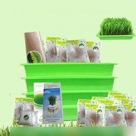 【小麥草種植套裝-1個月】4套輪種,每天半盤,16包種子可種16盤,可吃32天-5101004