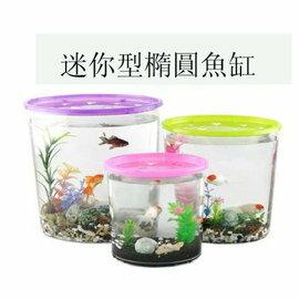 【迷你橢圓形小魚缸-透明PS-大號-2套/組】半透明彩蓋星形投料口,內景4棵水草/1包珊瑚石/4個貝殼-5101003