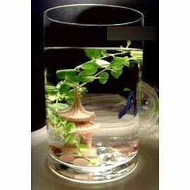 落地大花瓶 圓筒 圓柱 簡易玻璃魚缸 透明 富貴竹花瓶 厚重透亮15*40cm-7901002
